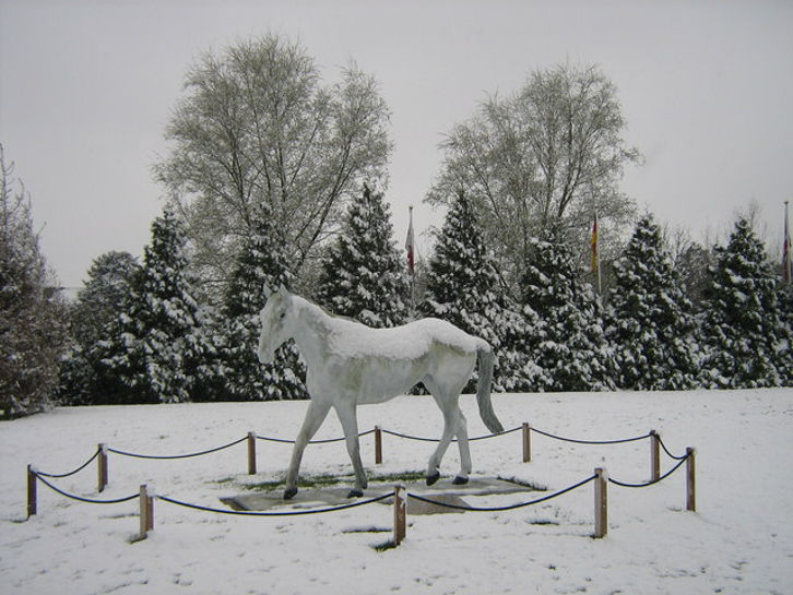Statue of Desert Orchid at Kempton