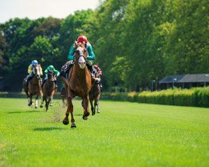 Flat Horse Racing